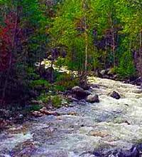 Fred Burr Creek